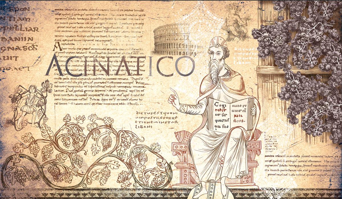Illustrazioni per agriturismo, ogni camera personalizzata su una storia. Acinatico vino antico